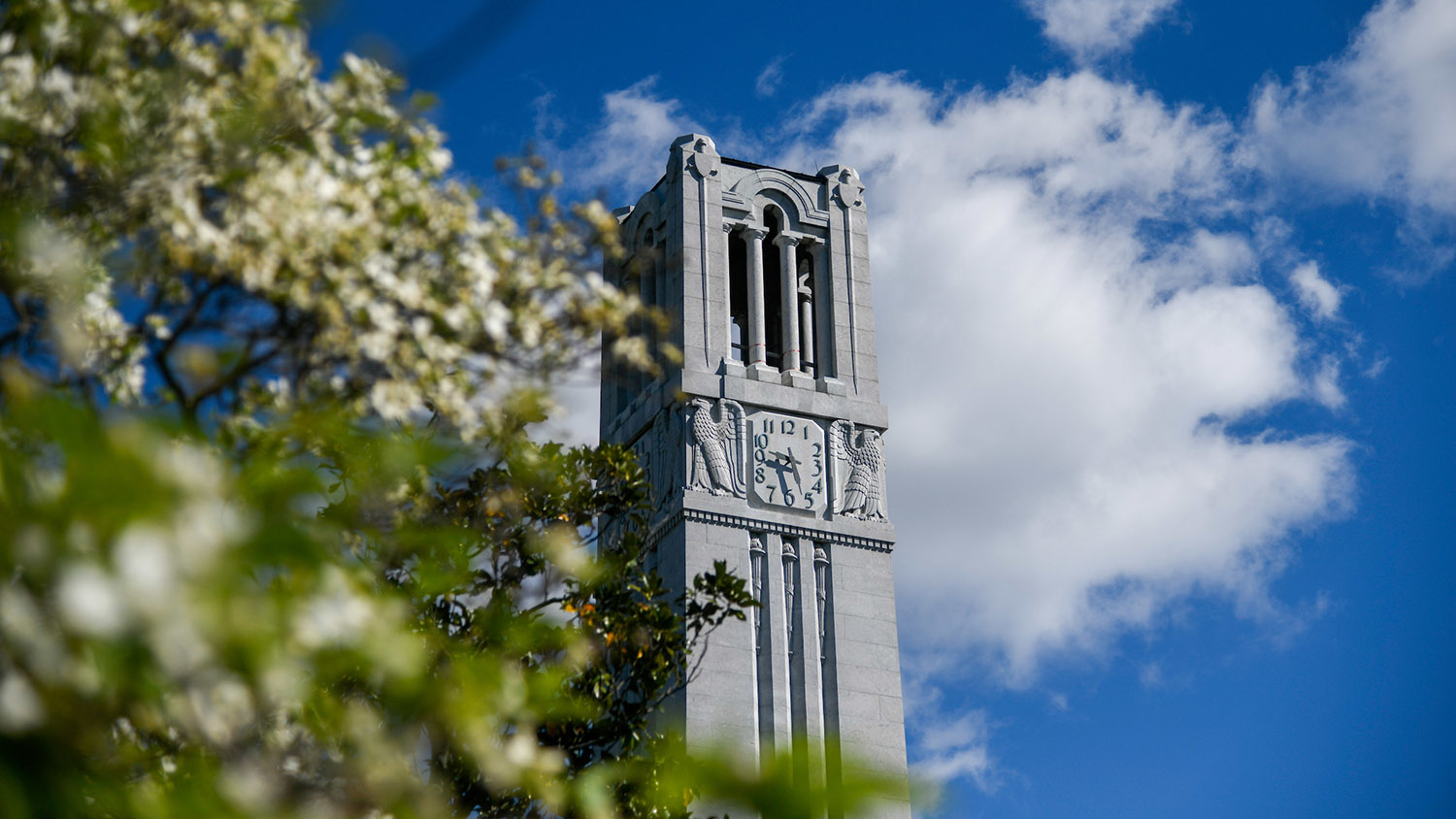 The NC State Belltower against a blue sky, with flowering trees in the foreground